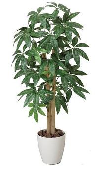 定番中の定番植物